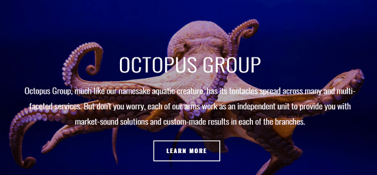 Whether Octopus Group is legit or not? Octopus Group Review